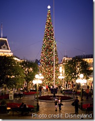 Christmas Tree on Main Street